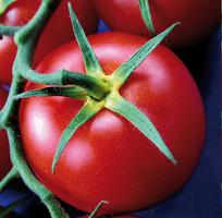O pilula din tomate salveaza milioane de vieti